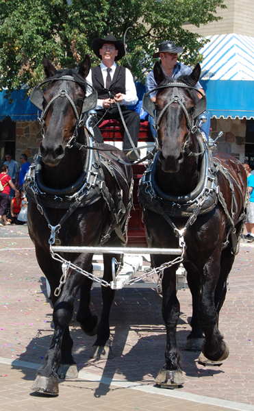 These beauties drew many admiring glances and comments during the parade. David F. Rooney photo
