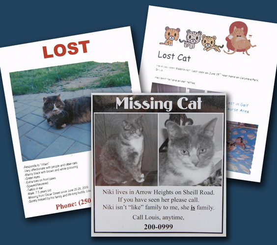 These are just a few of the posters put up around town by worried cat owners. David F. Rooney photo montage