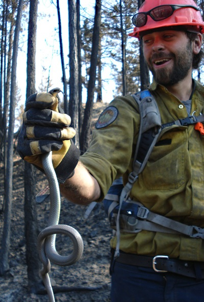 A firefighter holds a squirming bull snake that survived the Glenrosa Fire by slithering into a hole deep beneath the forest surface. Photo courtesy of Ben Parsons