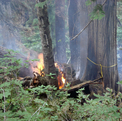 Flames devour a tree at the Perry River Fire. Photo courtesy of Ben Parsons