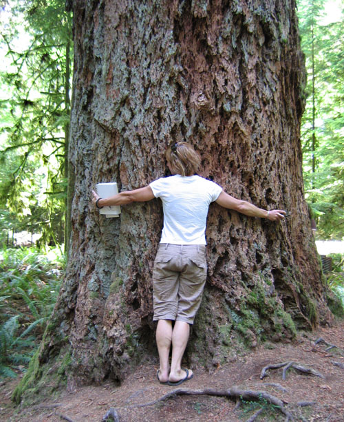 Painter Nicola McGarry hugs a tree at Cathedral grove. Photo courtesy of Cherie Vanoverbeke