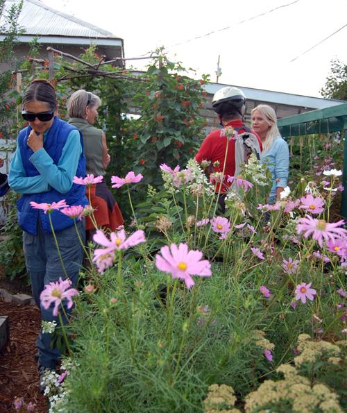 Marinba Huyler, Sue Leach, Frank Huyler and Rachel Thompson explore Sarah Newton and Rory Luxmoore's backyard garden plot. David F. Rooney photo