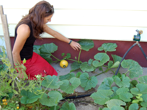 Alice Weber examines a squash growing in her backyard garden. The timer she uses to easily water her garden is on the right, attached to the faucet. David F. Rooney photo
