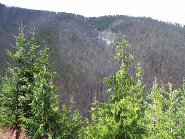 Here's another shot of a slope charred by forest fire near Halfway Creek. Photo courtesy of Marty Stroo