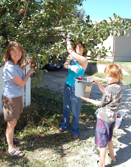 Bear Aware Coordinator Penny Page-Brittin (left) gets a couple of helping hands from her son, Simon, (right) and Gwen Lips (center) as toueed through Lower Town today (Thursday) picking up apples and plums for the joint Bear Aware-Food Bank Gleaning Program. To find out more about this valuable contribution to community life please click the Bear Aware button or the Community Connections Bog Box on the front of the Community News Section. David F. Rooney photo