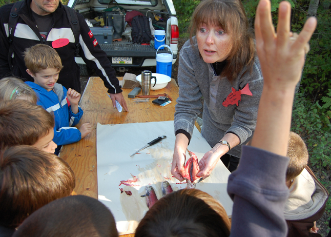 """Do you know what this is?"" BC Hydro biologist Karen Bray asks kids at the Kokanee Fish Festival as she dissects a red fish for them. David F. Rooney photo"
