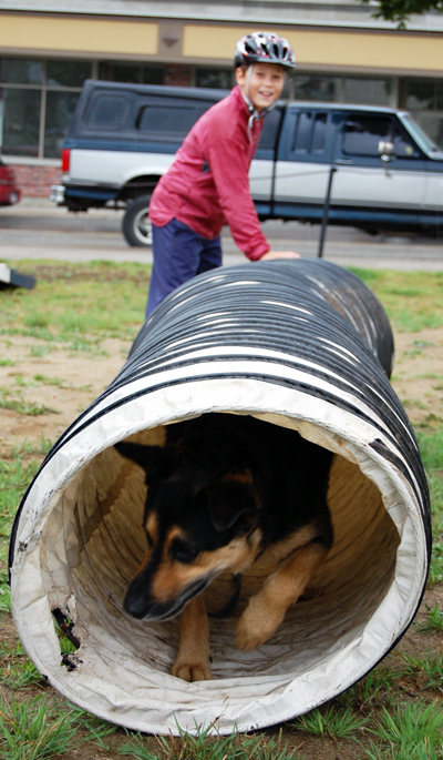 This pet had no trouble making his way through the tunnel on the obstacle course at the Just 4 Dogs event Saturday. David F. Rooney photo