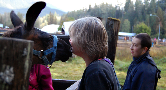 Sonny the llama liked Sue Leach so much he gave her a quick smooch. David F. Rooney photo