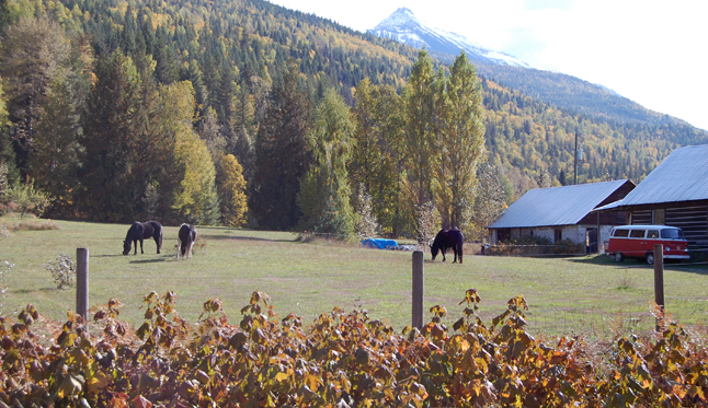 The early autumn foliage and the icy horn of Mount Cartier made a very pretty backdrop for this photo of grazing horses on Lennard Road. David F. Rooney photo.