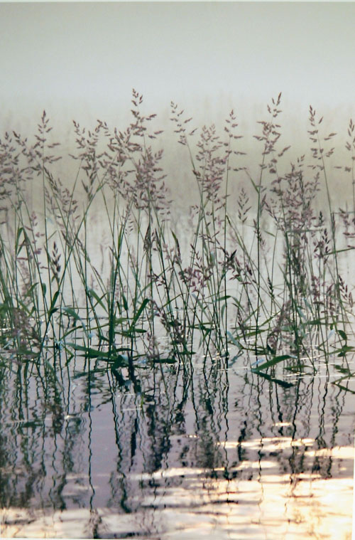 Mike Young's image, Grasses in the Columbia, was the best adult work in the Creative Images of Nature category.