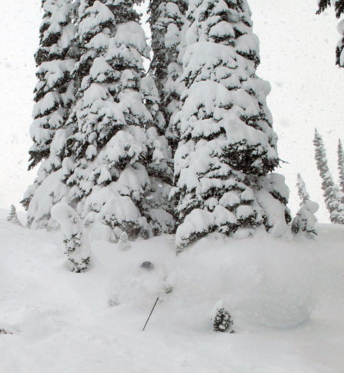 ... tumbles. Of course, like any avid skier he got up, shook himself off and continued down-slope. Photo courtesy of Karilyn Kempton/Revelstoke Mountain Resort