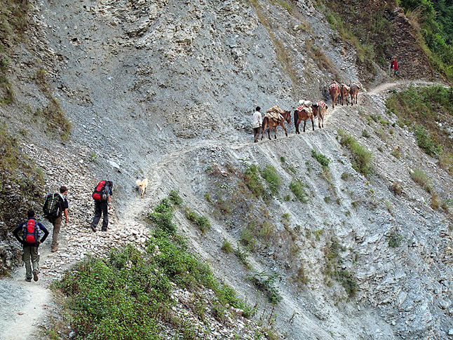 Laura Stovel's interpreter and colleagues from the Carter Centre walk along behind their mule train in the Himalayas. Photo courtesy of Laura Stovel