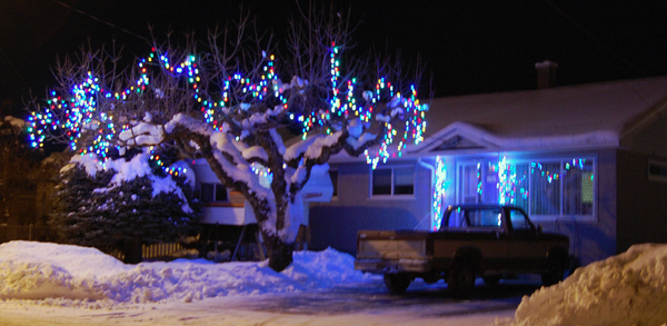 Down in South Revelstoke this tree beckons to passersby.  David F. Rooney photo