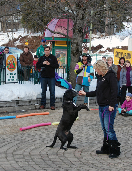 Beau stands on his hind legs for a treat from Cassandra MacRae. David F. Rooney photo