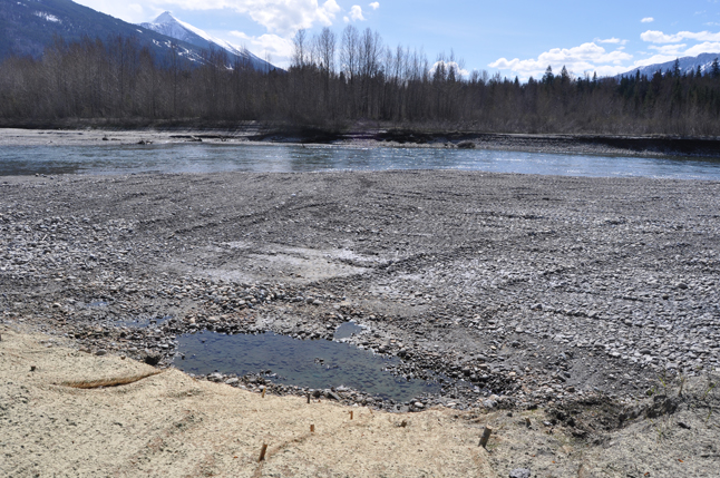 BC Hydro Community Liaison Jennifer Walker-Larsen, went down to take a look after hearing of concerns expressed by the Illecillewaet Greenbelt Society, which has tenure over the area and maintains it as a sliver of the relatively undisturbed natural world within the city boundaries. David F. Rooney photo