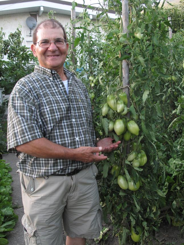 Guiseppe Iaccino grows some incredible tomatoes. Laura Stovel photo