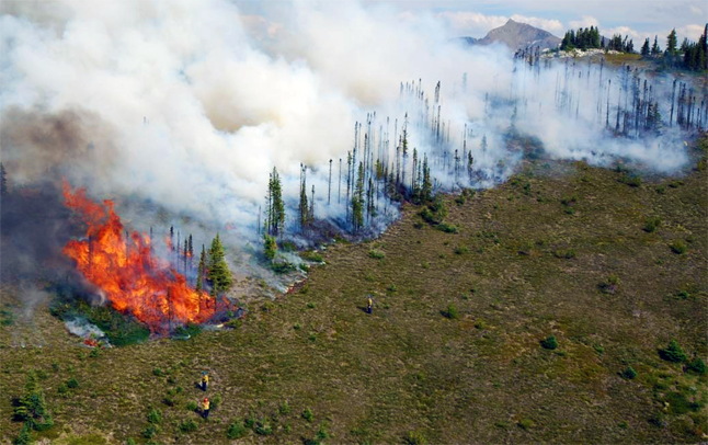 Sub-alpine trees provide fuel for the fire and embers can carry the fire over the summit to another valley. By burning these pockets of trees ahead of the fire, Parks Canada fire crews remove the risk of the Bald Hills fire spreading into the adjacent valley. Simon Hunt /Parks Canada photo