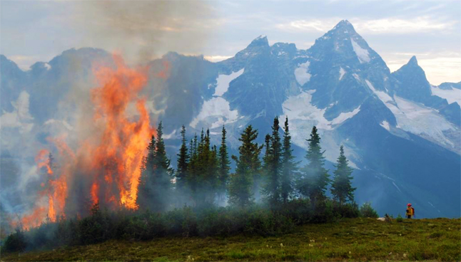 A member of a Parks Canada initial attack fire crew watches the flames climb into the air  after igniting a cluster of trees ahead of the Bald Hills Fire thus preventing uncontrolled fire spread. The eastern side of Mount Sir Donald can be seen in the background. Simon Hunt /Parks Canada photo