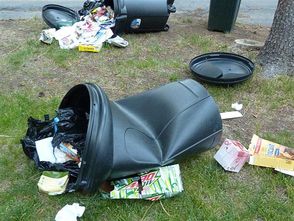 The aftermath of a bear visiting garbage cans. Photo courtesy of Revelstoke WildSafeBC