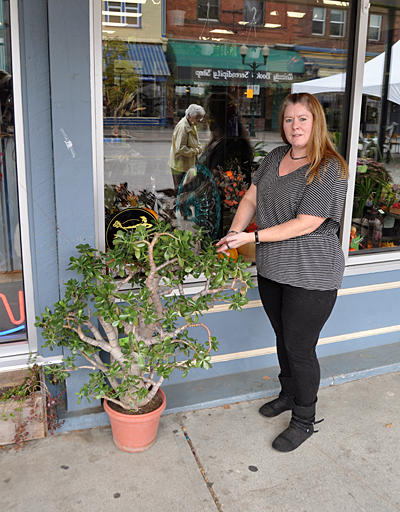 Revelstoke Florist's Deanna Ward puts out an 80-year-old jade plant just prior to Saturday's Best of the Fest Cornucopia event. This is a gorgeous plant and Deanna hoped someone would purchase it. David F. Rooney photo