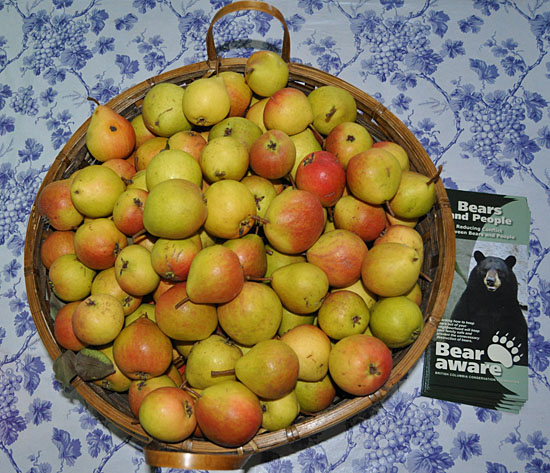 These gorgeous looking tiny pears  came with a reminder from Bear Aware. David F. Rooney photo