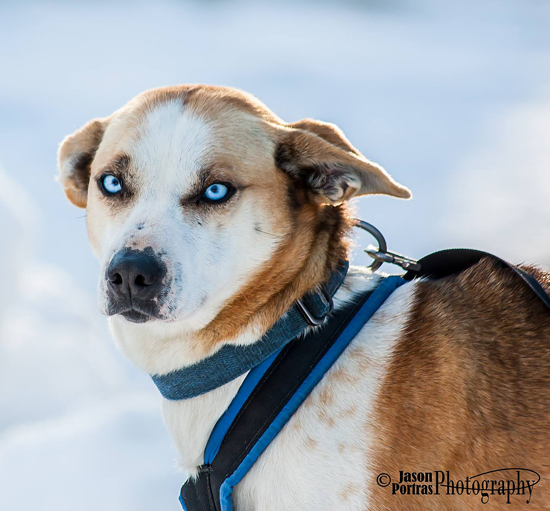 """Eric is quoted as saying on his company website, """"Dogs are the best business partners out there."""" Looking at this face and those eyes, how can anyone deny that? Jason Portras photo"""