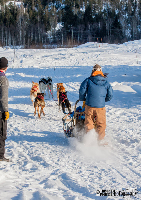 The dogs head out in a Double Lead formation, in which two dogs lead the team side-by-side. Jason Portras photo