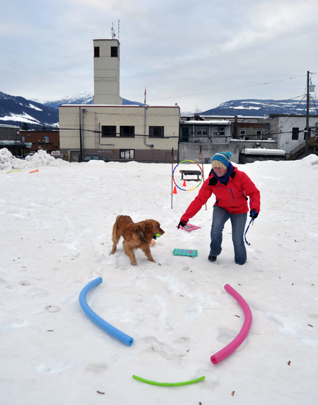 Mondo the retriever looks like he wants to play fetch rather than negotiate the obstacle course. David F, Rooney photo