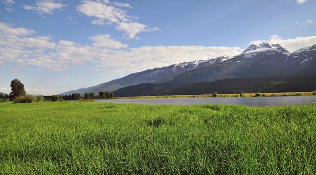 A haven for wildlife viewing and biological diversity, The Revelstoke wetlands seem to be an underutilized recreational space and somewhat elusive to our community. For such a beautiful ecosystem right in our own backyard, many people do not realize it is available to enjoy a walk with friends and family, birding, a nice picnic, or a cross country ski. If you indulge in any of these activities, perhaps you have never noticed that upon closer inspection it can be seen that this place is an important stop on the migratory path of various water birds. Or, know that there is a rich history tied into the biology of this region. Or, have heard that there is ongoing research into the future use and sustainability of this space.A haven for wildlife viewing and biological diversity, The Revelstoke wetlands seem to be an underutilized recreational space and somewhat elusive to our community. For such a beautiful ecosystem right in our own backyard, many people do not realize it is available to enjoy a walk with friends and family, birding, a nice picnic, or a cross country ski. If you indulge in any of these activities, perhaps you have never noticed that upon closer inspection it can be seen that this place is an important stop on the migratory path of various water birds. Or, know that there is a rich history tied into the biology of this region. Or, have heard that there is ongoing research into the future use and sustainability of this space. On May 2, the North Columbia Environmental Society will be hosting a speaker event at the Revelstoke Visual Arts Centre to shed light on the past, present and future of the Airport Marsh. Doors open for art viewing at 6:30 pm, presentations at 7:00 pm on May 2 at the Revelstoke Visual Arts Centre. Please visit www.northcolumbia.org for more information. Harry Van Oort photo