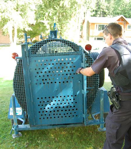 Adios Sally. Desjardins said he would release this bear 80 to 100 kilometres away. David F. Rooney photo