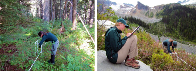 Researchers count and weigh berries at different elevations in the two parks. Left: Joe Uzelac/Parks Canada photo, Right: Natalie Stafl/Parks Canada photo