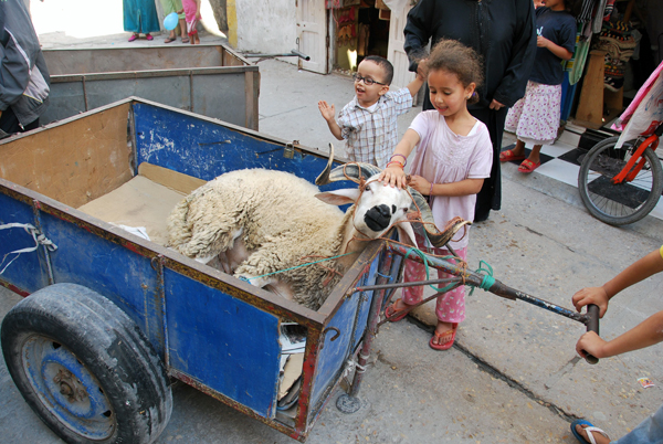The market in live sheep before the Eid is a family affair: these children happily petted the object of the next day's sacrifice. The next part of the journey was upstairs to the family apartment. Leslie Savage photo