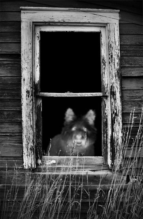 online-season-for-fear-ghost-dog