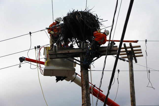 Rick Carr and Al Moloney install grounding rods in the nest. BC Hydro photo
