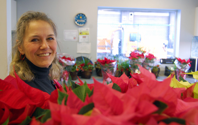Zophie Humphreys was awash in brilliant red and white poinsettias and other Christmas season plants at the Big Eddy Fuel office on Highway 23S on Tuesday, December 2. The business was Christmas plant-central as the delivery point for hundreds of poinsettias and other live plants sold as part of the fundraising drive for the RSS band trip. The kids who worked on the fund-raiser sold $12,000 worth of plants, Zophie said. David F. Rooney photo