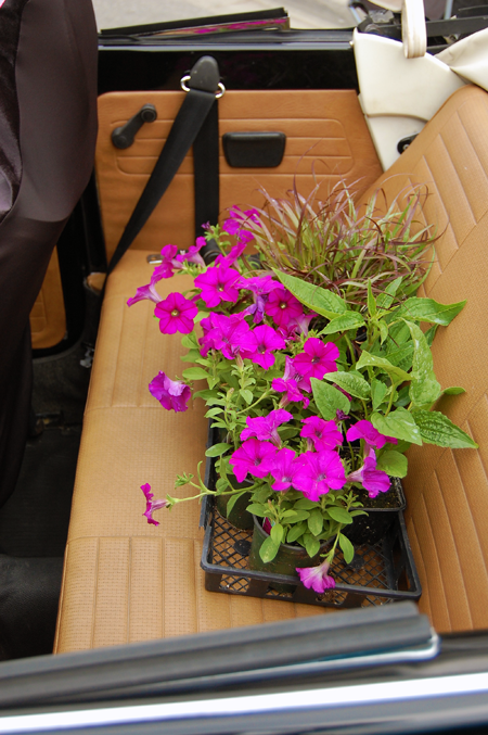 It seems Brenda's bug was doing double duty on Saturday. Not only was it on exhibit but she had picked up some petunias for planting. David F. Rooney photo