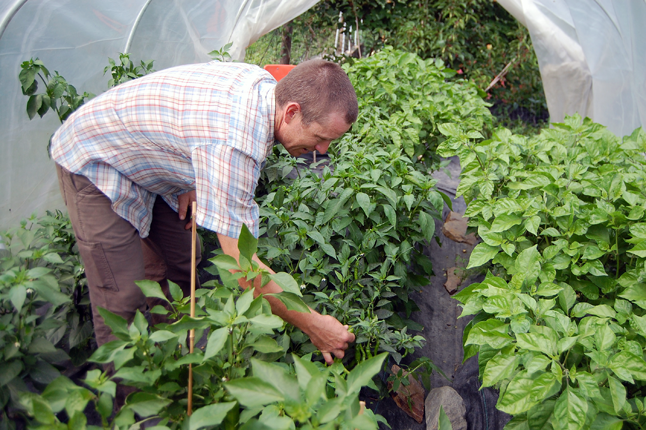 Here's something else to anticipate:  a variety of hot, HOT peppers lovingly tended by Stu. David F. Rooney photo
