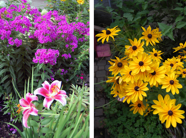 Jim and Sharon's garden is always ablaze with floral glory. David F. Rooney photo