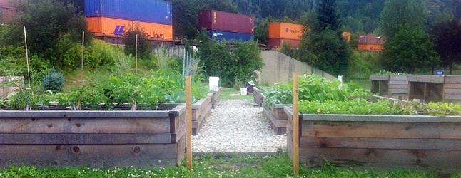 Here's a view of the new Community Garden beds at the Visual Arts Centre. Come celebrate their official opening on Saturday, July 25, at 5 pm. David F. Rooney photo