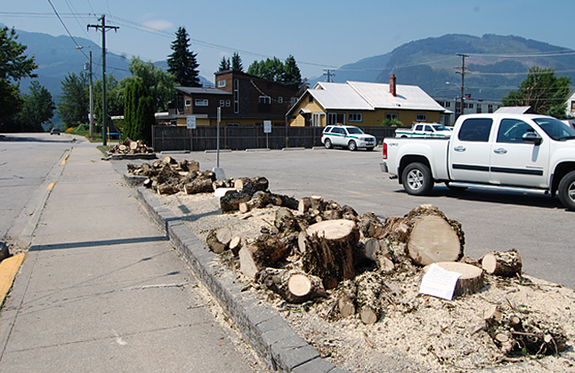 These pathetic bits and pieces are all that remain of the line of lovely maple trees that lined the southern edge of the parking lot on Campbell Avenue behind the Canada Post and Parks Canada offices. The trees were allegedly butchered this week by BC Hydro because their branches were too close to some overhead lines. As you can see in the bottom image, an anonymous resident is urging Revelstokians to register their anger by calling Hydro. David F. Rooney photo