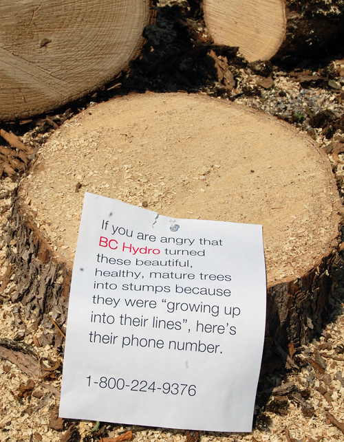 This message was left by a a resident who obviously did not appreciate Hydro's heavy-handed approach to the urban treescape. David F. Rooney photo