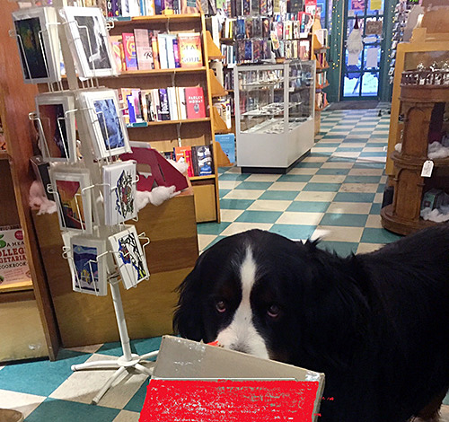 Vanessa Smith's friendly and talented dog, Shakespeare, selected the nine winners of the special draw Vanessa held for customers durning Moonlight madness. Photo courtesy of Vanessa Smith