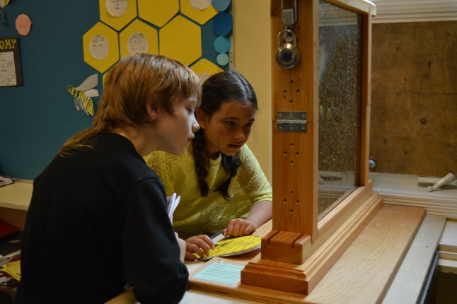Zoe Smith and Jordan Schoonover peer into a glassed-in bee hive, looking for a queen. They explain that you can tell a queen bee because of her size and that the queen is chosen when the other bees give her royal jelly.