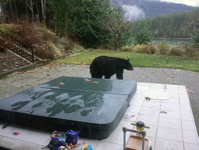 Peter Bernacki knows a lot of people in high — and low — places... like this black bear who decided to drop by a little R&R in the hot tub. Peter Bernacki photo